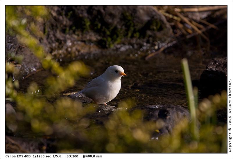 bird_2627.jpg